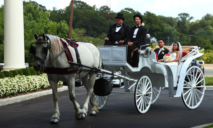 Wedding couple in horse drawn carriage
